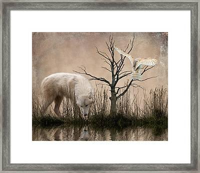 Woodland Wolf Reflected Framed Print by Sharon Lisa Clarke