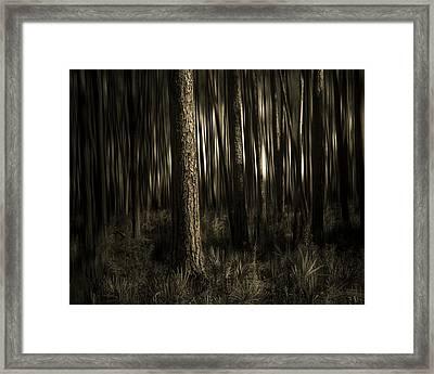 Woods Framed Print by Mario Celzner