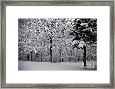 Woods View Framed Print by Amanda Barcon