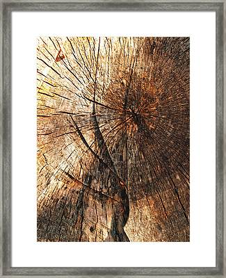 Woodwork...learning To Fly Framed Print by Tom Druin