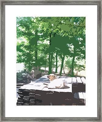 Working Dog Framed Print by Tanya Sorth