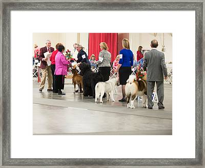 Working Group Winners 2-1-15 Framed Print by Dog Show Video