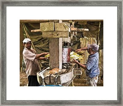 Working Hard For Sugar Framed Print by Heiko Koehrer-Wagner
