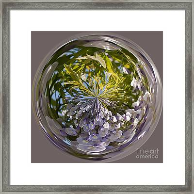 World Of Wisteria Framed Print by Anne Gilbert