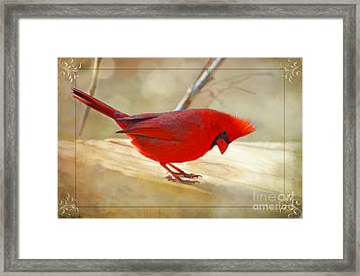 Wow I Need A Pedicure Framed Print by Debbie Portwood