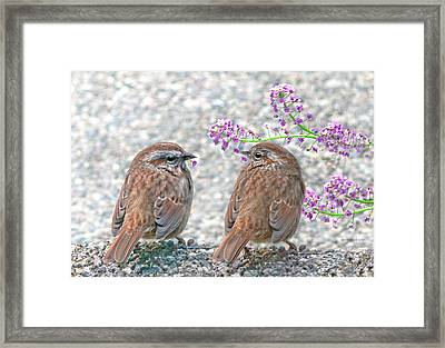 Wren Bird Sweethearts Framed Print by Jennie Marie Schell
