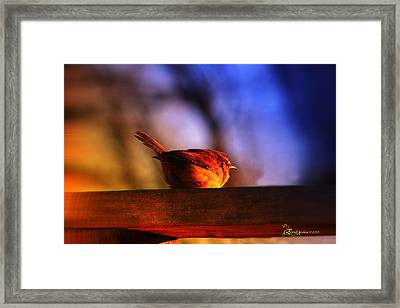 Wren In Early Morning's Light - Featured In In Newbies-nature Wildlife- Comfortable Art Groups Framed Print by EricaMaxine  Price