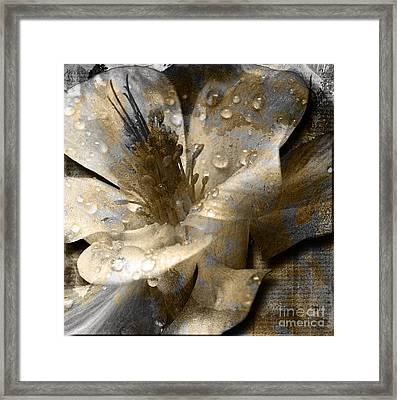 Wren Framed Print by Yanni Theodorou