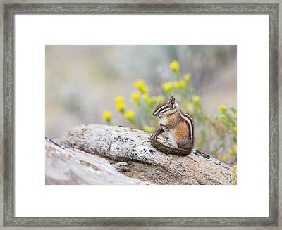 Wyoming, Sublette County, Least Framed Print by Elizabeth Boehm