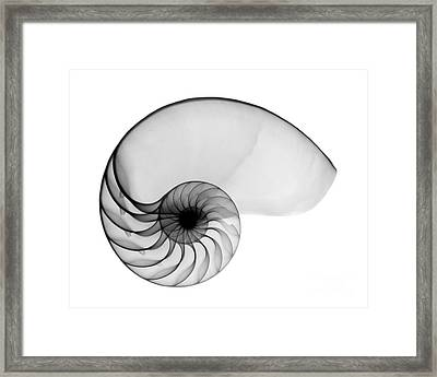 X-ray Of Nautilus Framed Print by Bert Myers