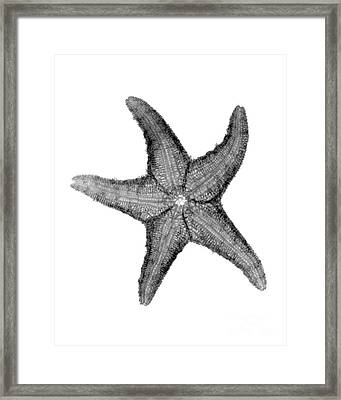 X-ray Of Starfish Framed Print by Bert Myers