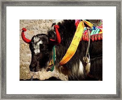 Yak Wearing Knitted Decorative Horn Framed Print by Jaina Mishra