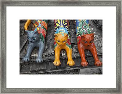 Yard Kitties Framed Print by Greg Kopriva