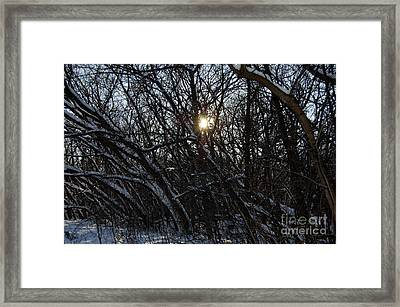 Yearning For Spring By Jammer Framed Print by First Star Art