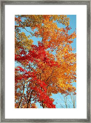Yellow And Red Framed Print by Patrick Shupert