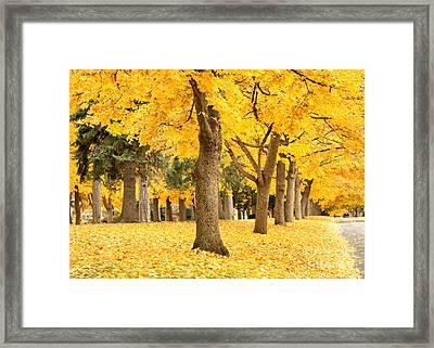 Yellow Autumn Wonderland Framed Print by Carol Groenen