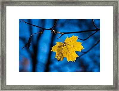 Yellow Blues - Featured 3 Framed Print by Alexander Senin