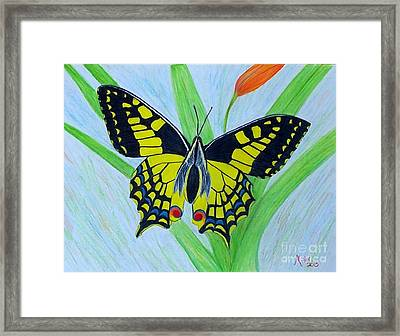 Yellow Butterfly Framed Print by Peggy Miller