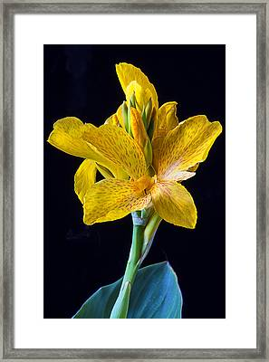 Yellow Canna Flower Framed Print by Garry Gay
