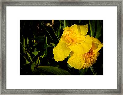 Yellow Canna Singapore Flower Framed Print by Donald Chen