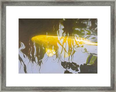 Yellow Carp In The Morning Framed Print by Robert Conway