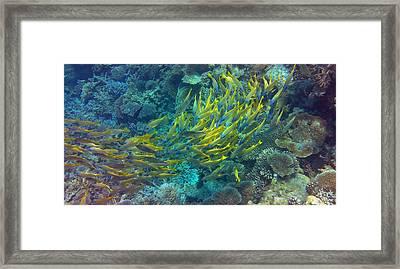 Yellow Framed Print by Corinne Rhode