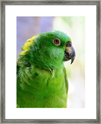 Yellow Crowned Amazon Parrot No 1 Framed Print by Mary Deal