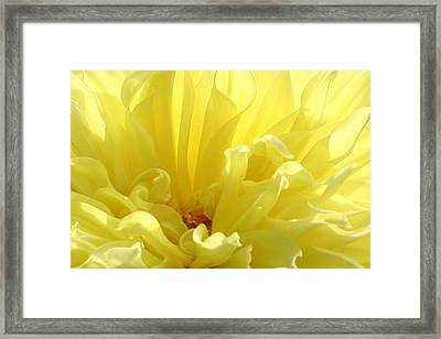 Yellow Dahlia Burst Framed Print by Ben and Raisa Gertsberg