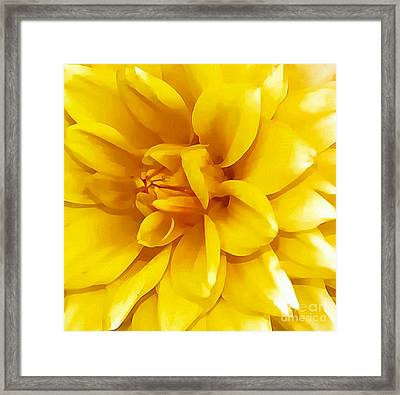Yellow Dahlia Framed Print by Kathleen Struckle