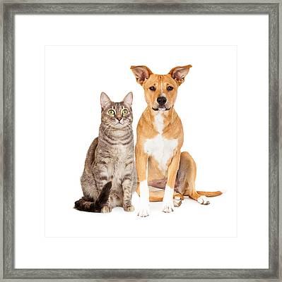 Yellow Dog And Tabby Cat Framed Print by Susan  Schmitz