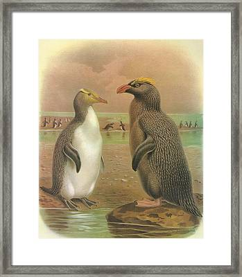 Yellow Eyed Penguin And Snares Crested Penguin  Framed Print by J G Keulemans