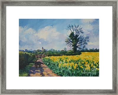 Yellow Field And Rex Framed Print by John Clark
