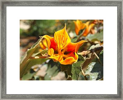 Yellow Flower Framed Print by Gregory Dyer
