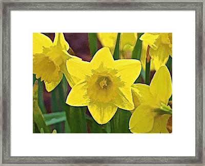 Yellow Flower Iris Framed Print by David Letts