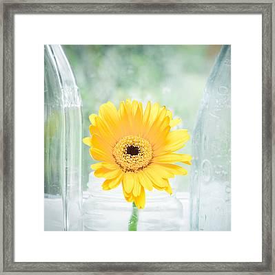 Yellow Flower Framed Print by Tom Gowanlock