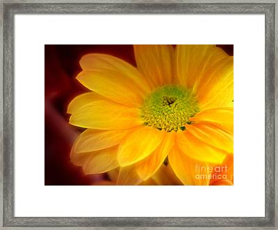 Yellow Flowerglow Framed Print by Lutz Baar
