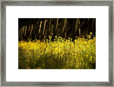 Yellow Flowers  Framed Print by Alicia Morales