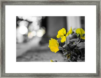 Yellow Flowers Framed Print by Nathan Hillis