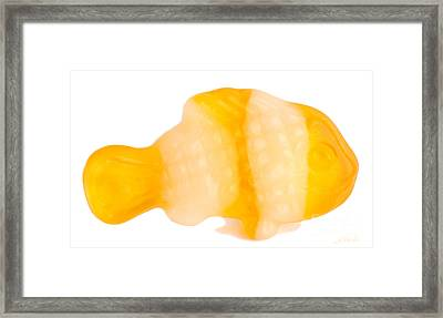 Yellow Gummy Clown Fish Framed Print by Iris Richardson
