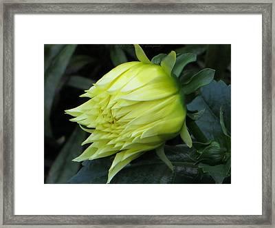 Yellow In Bloom Framed Print by Sonali Gangane