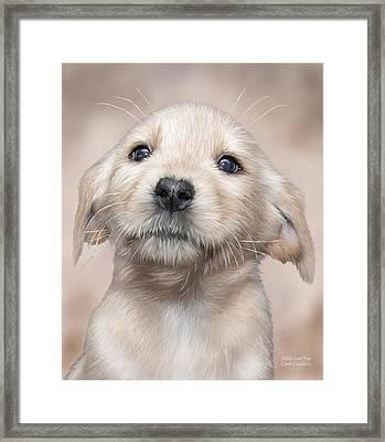 Yellow Lab Pup Framed Print by Carol Cavalaris