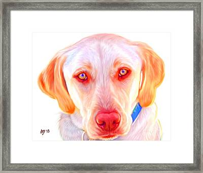 Yellow Labrador Dog Art With White Background Framed Print by Iain McDonald