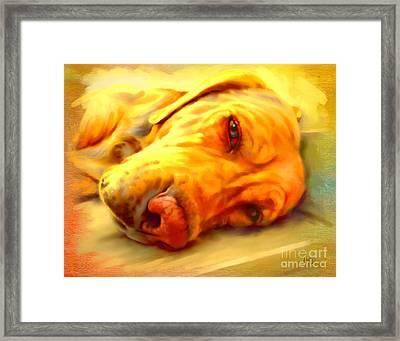 Yellow Labrador Portrait Framed Print by Iain McDonald