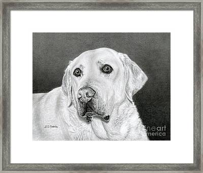Yellow Labrador Retriever- Bentley Framed Print by Sarah Batalka