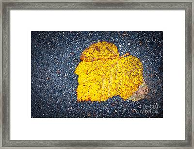 Yellow Leaf On Ground Framed Print by Silvia Ganora