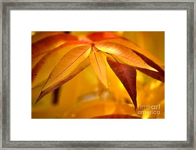 Yellow Leaves At Dawn Framed Print by Deb Halloran