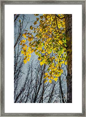 Yellow Leaves Framed Print by Carlos Caetano