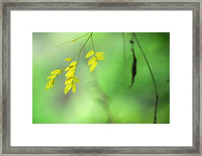 Yellow Leaves Framed Print by Guido Montanes Castillo
