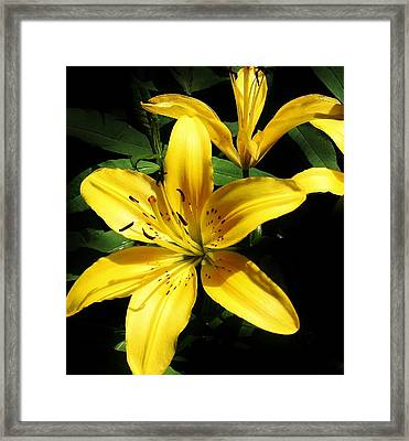 Yellow Magic Framed Print by Bruce Bley