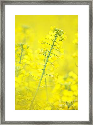 Yellow Makes Me Happy Framed Print by Angela Doelling AD DESIGN Photo and PhotoArt
